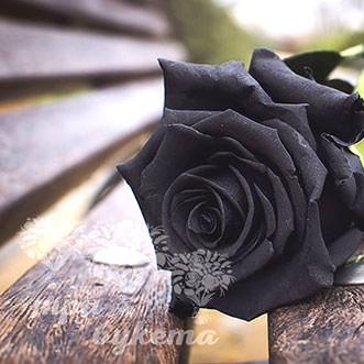 Черные розы поштучно
